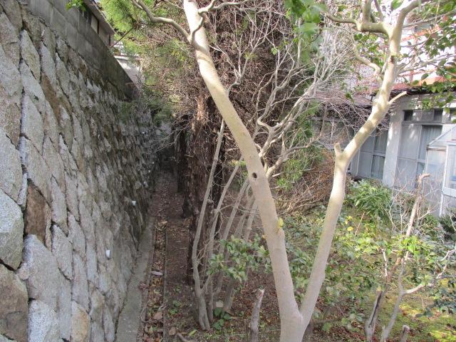 南西側石垣