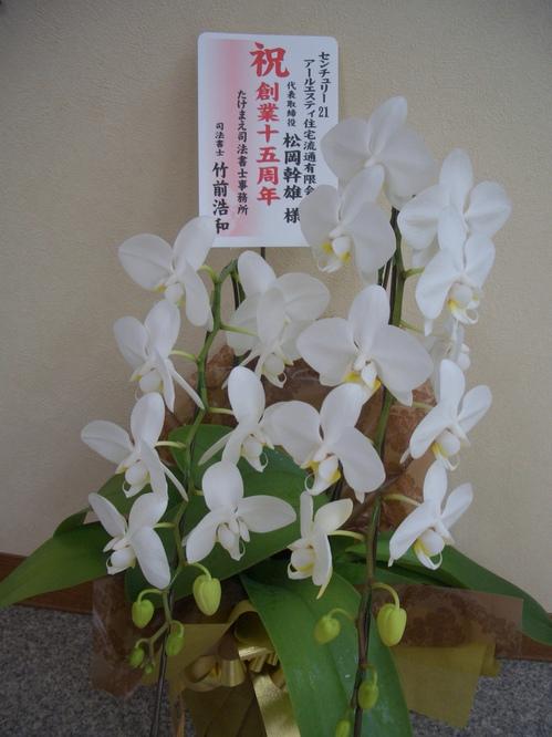 胡蝶蘭1.JPG