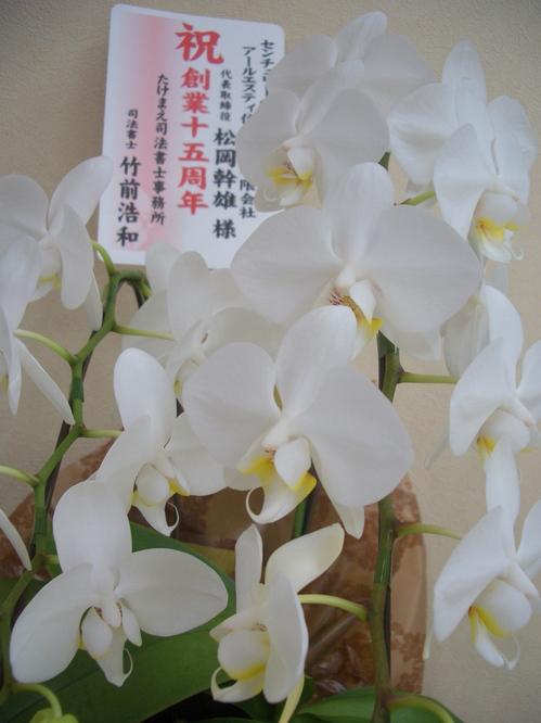 胡蝶蘭3.JPG